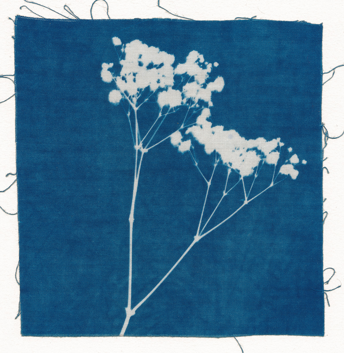 Flora, cyanotype on cotton fabric, Mike Tedder