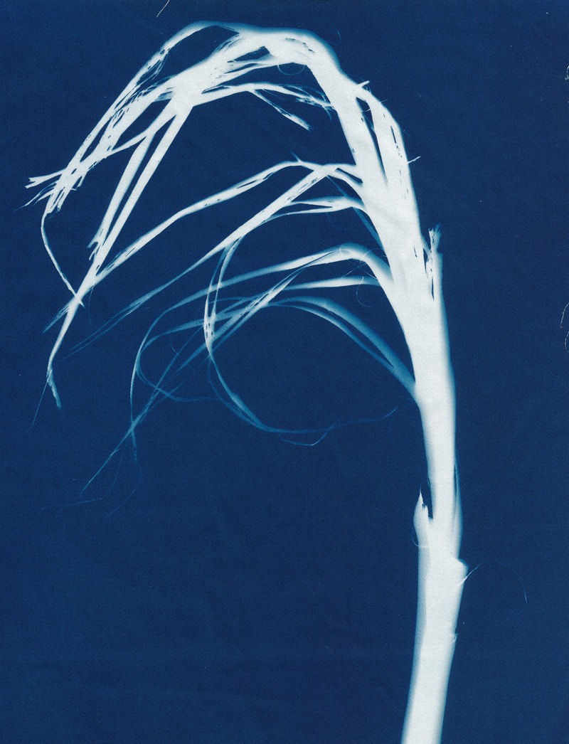 Blowing in the Wind, cyanotype on cotton fabric, Mike Tedder