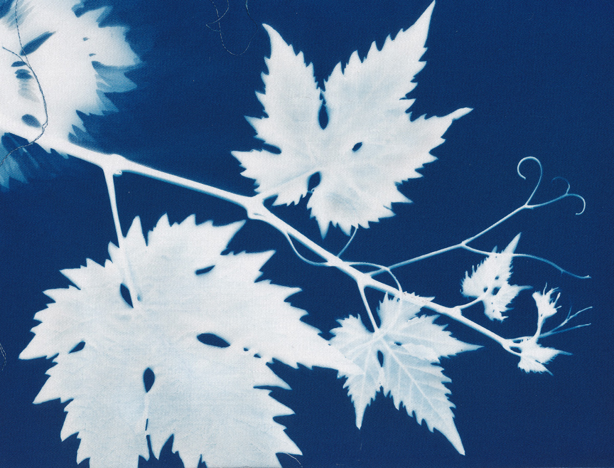 Vine, cyanotype on cotton fabric, Mike Tedder
