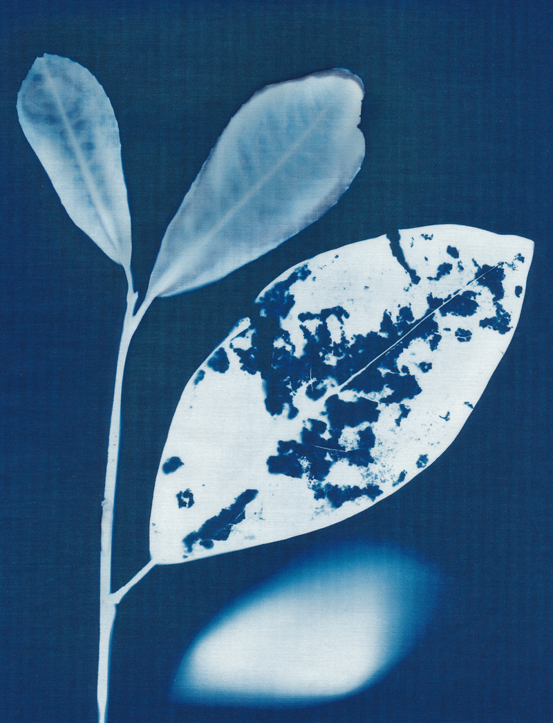Fade Away, cyanotype on cotton fabric, Mike Tedder