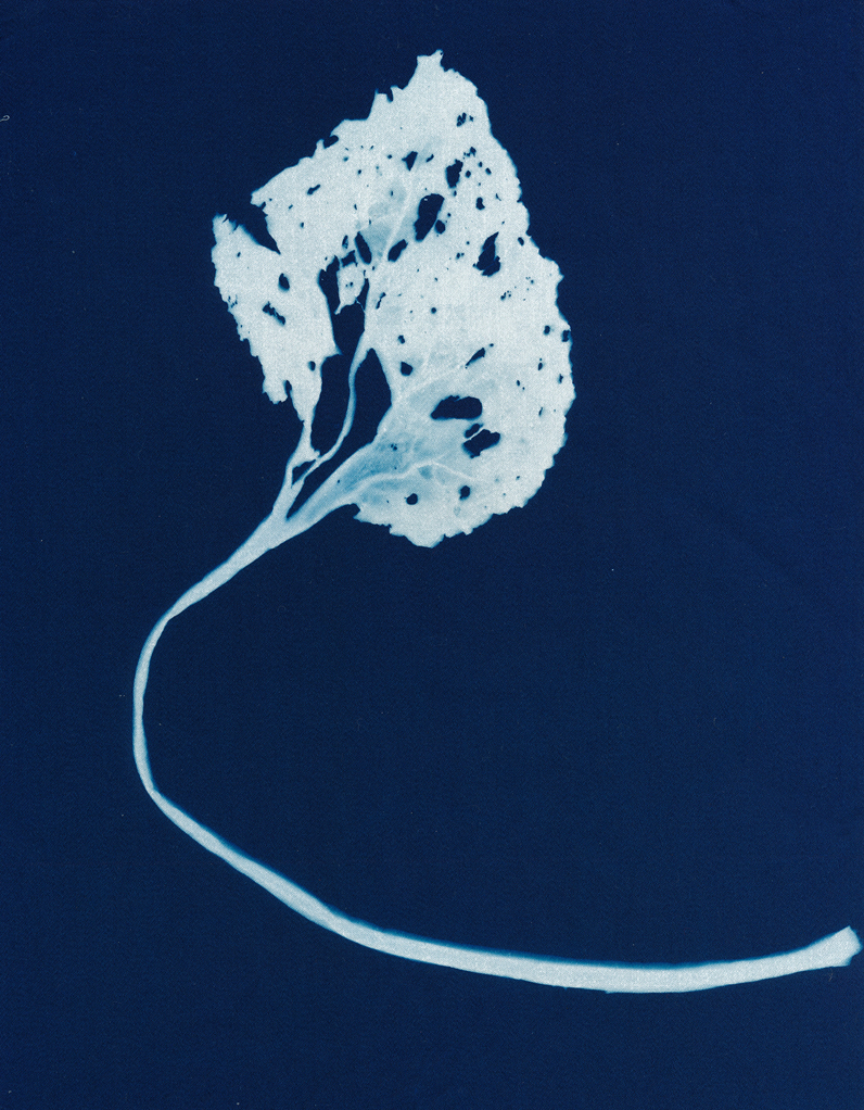 A Beautiful Decay, cyanotype on cotton fabric, Mike Tedder