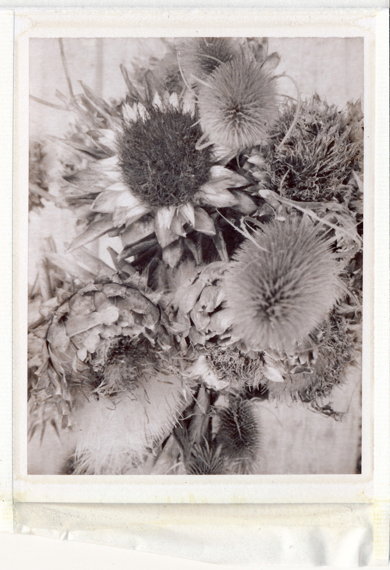 Polaroid 250 camera, Sepia type100 print, Mike Tedder