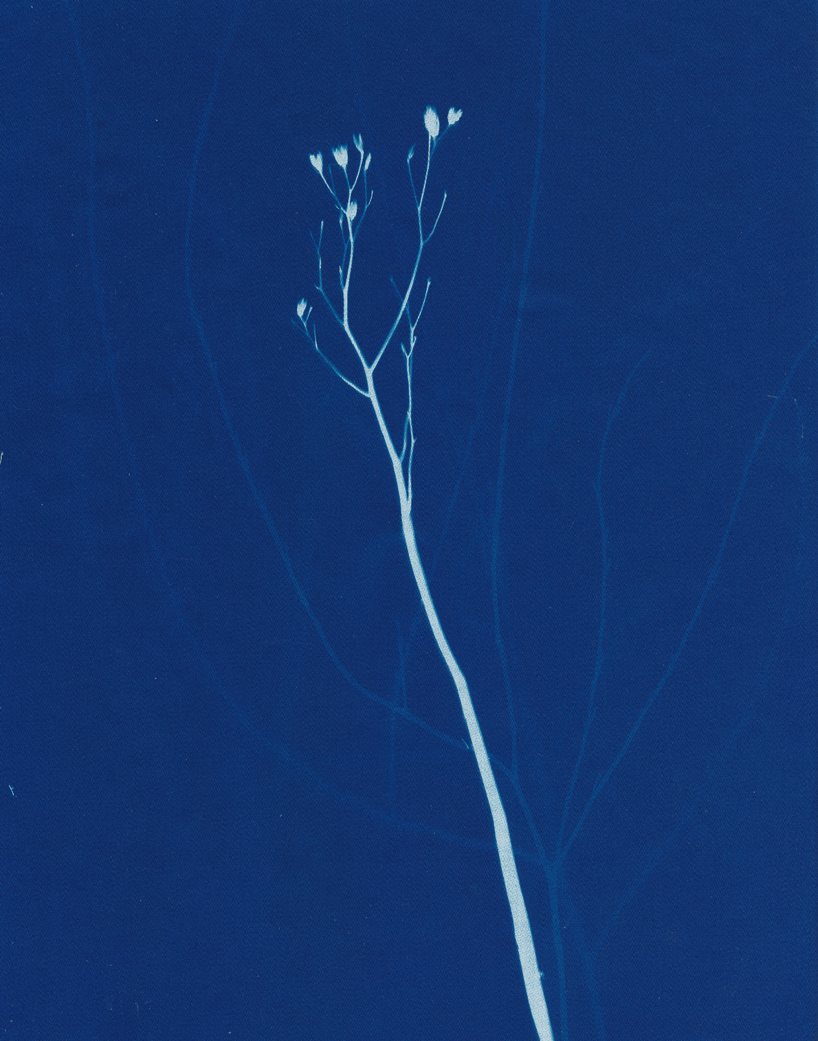 Les fleurs du silence, cyanotype on cotton fabric, Mike Tedder