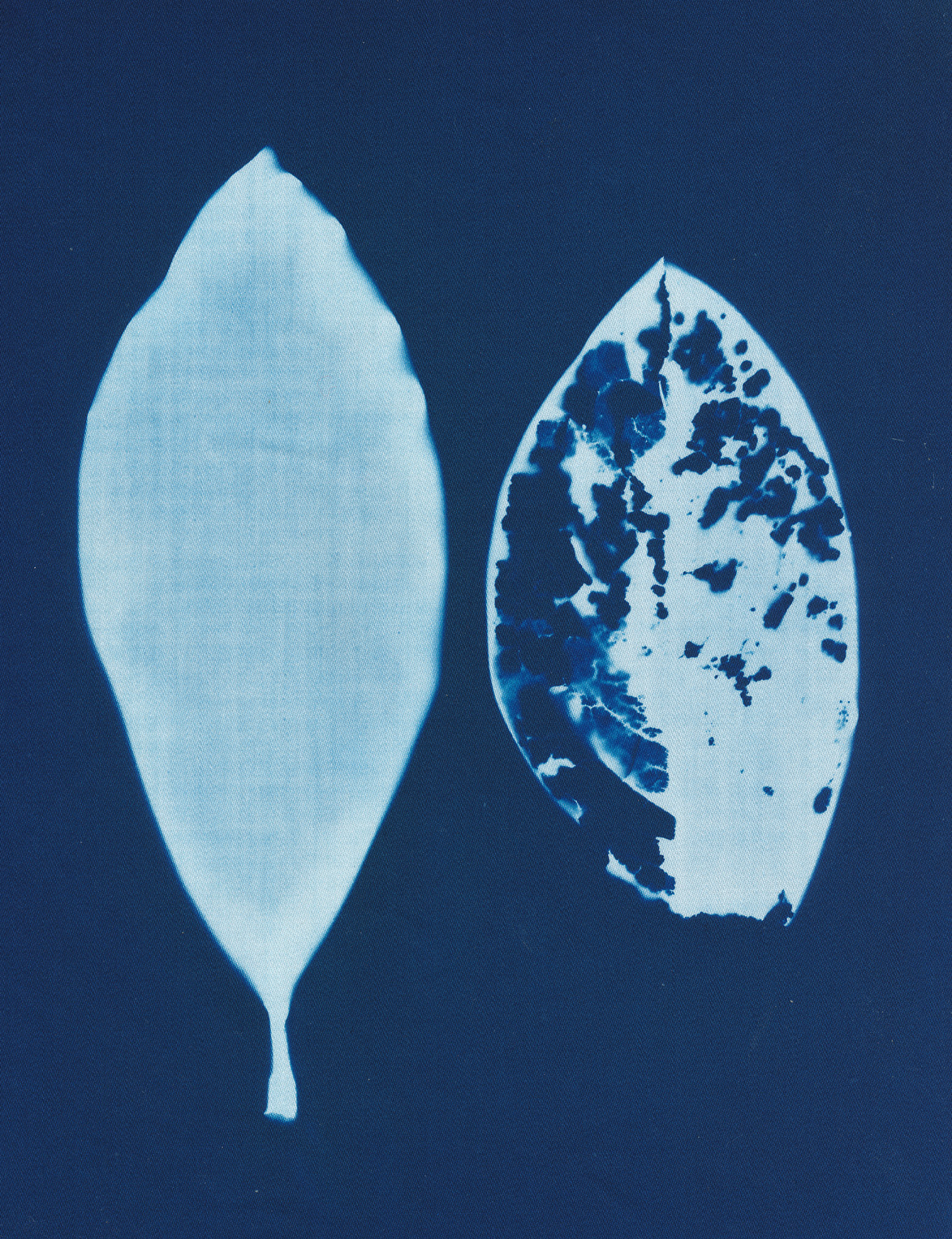 We Fade, cyanotype on cotton fabric, Mike Tedder